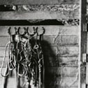 halters hanging in barn